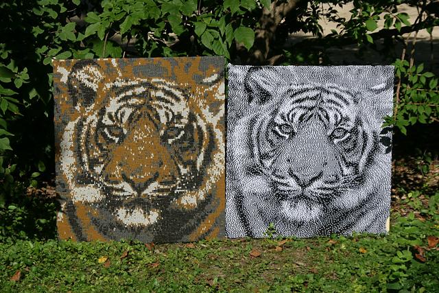 tigers 1 & 2